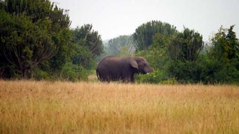 14_01_elefant
