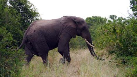 14_01_elefant2